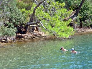 Swimming in the shade of some pines